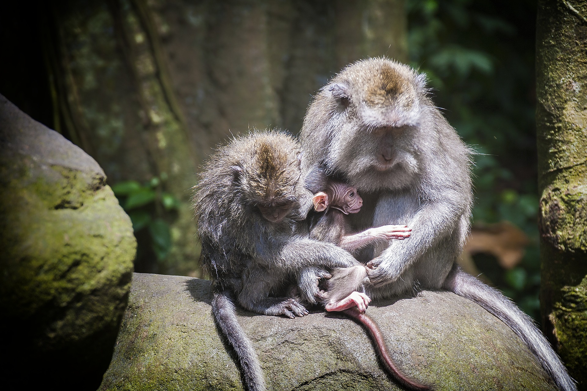 Visiting The Ubud Monkey Forest In Bali Island