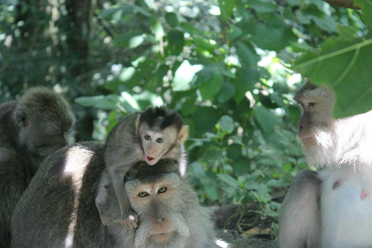 Ubud Monkey Forest in Bali