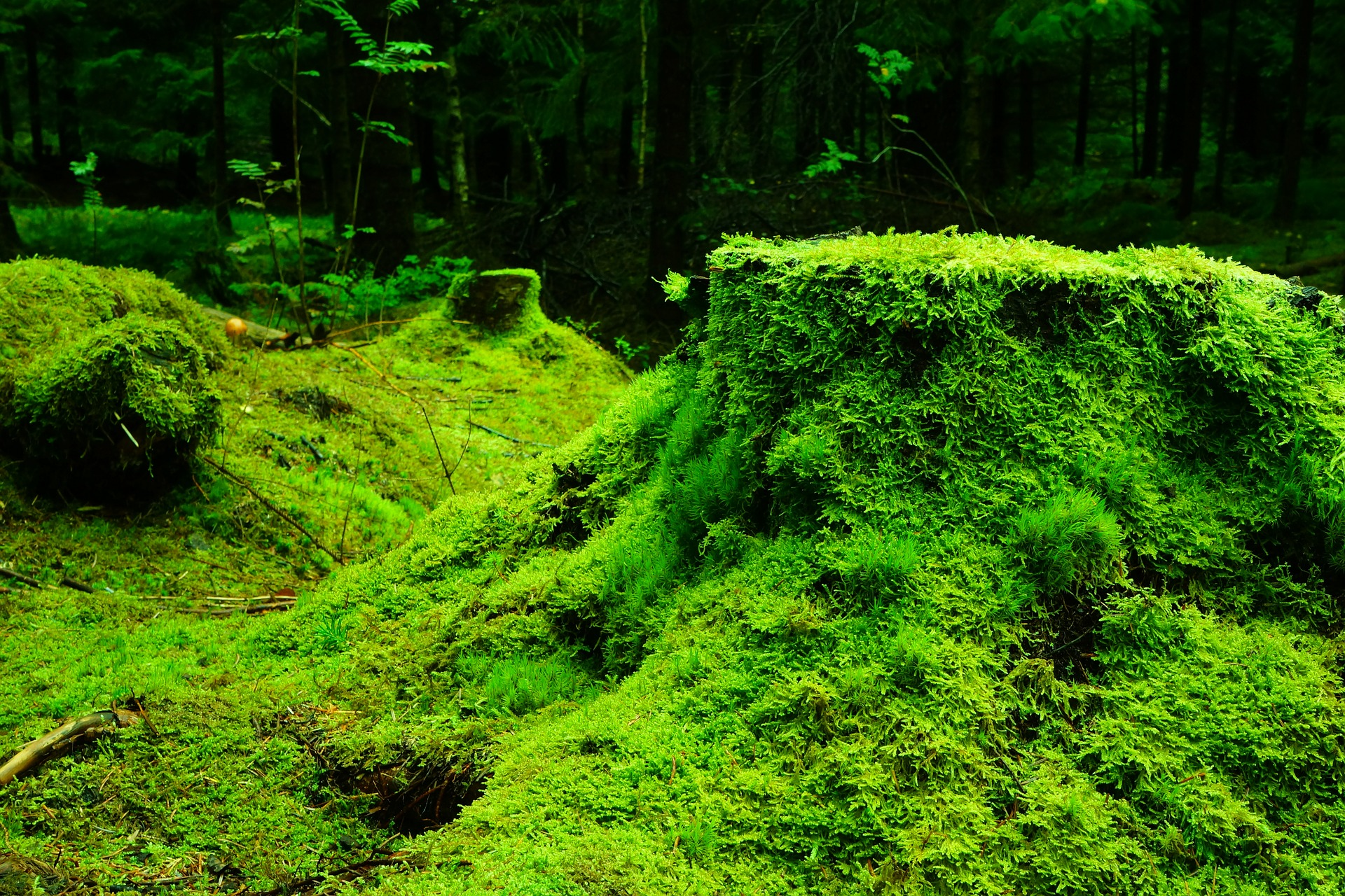 forest-483206_1920