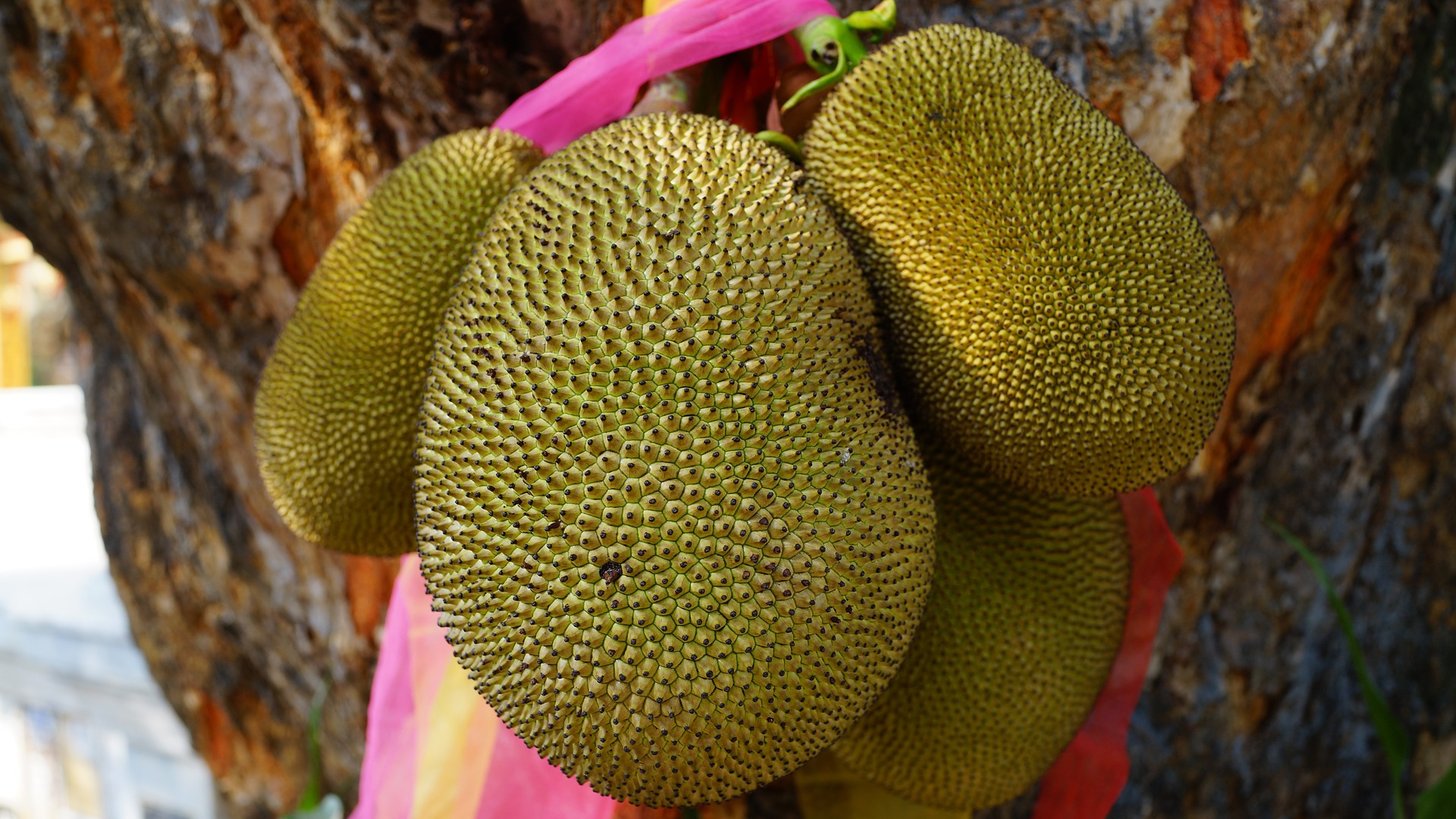 Top 25 Unusual Exotic Fruits From Asia You Must Try