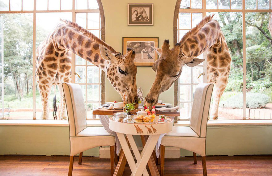 20 Of The World's Most Amazing Restaurants To Eat In Before You Die